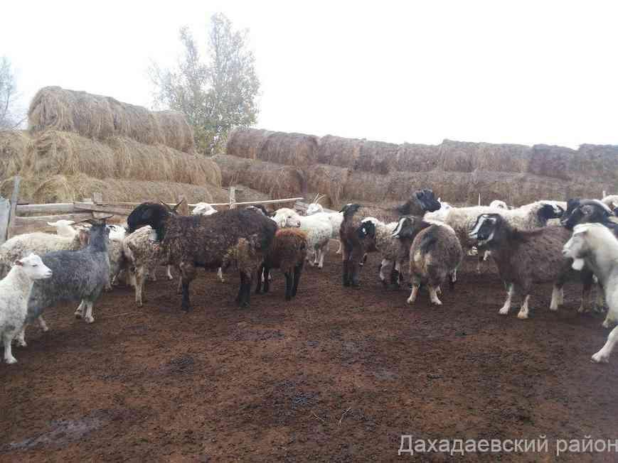 Готовность к зимовке скота обсудили в Дахадаевском районе